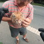 道路でうずくまっていた猫