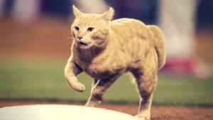 球場を走り回る猫