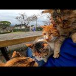 撮影者のもとに集まる猫