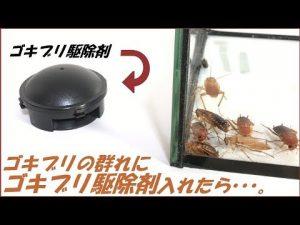 アースコンバットのゴキブリへの効果を検証している動画の1シーン