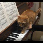 ピアノの練習を邪魔する猫