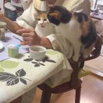 猫に囲まれながら食事をとる住職