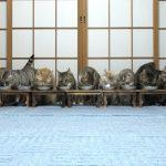 並んで餌を食べる猫たち