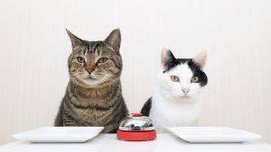 呼び鈴を鳴らす猫
