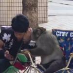 猿と会話する日本人