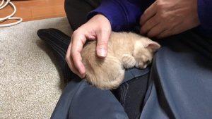 何度も膝の上に乗ってる猫