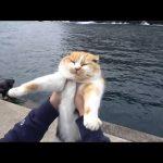 堤防で保護された猫。まりもという名前。