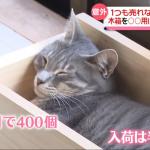 猫用プランターで寝る猫