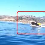 カヤックを飲み込むクジラ