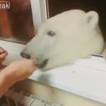 窓にやってきた熊