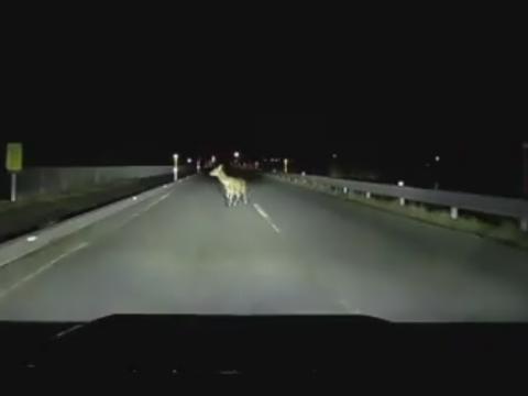 道路上に居た鹿