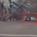 倒れてくる木の下を通る車