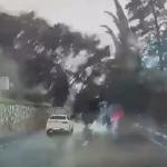 【海外ニュース】やはり嵐の日は外出を控えた方が良い。倒木に車が巻き込まれる様子が公開。